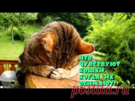 Что чувствуют кошки, когда их обижают - YouTube