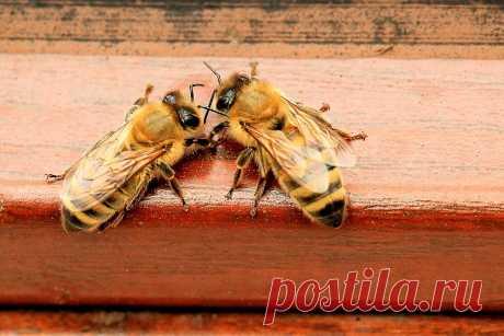 Чем или кем, на самом деле, является пчелиная семья? | Пчелы в радость | Яндекс Дзен