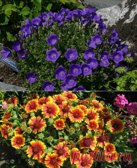 Неубиваемые цветы для сада, не требующие вашего внимания — 7 часть | Что посадить? | Яндекс Дзен