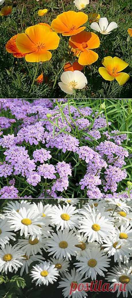 15 растений для первой детской клумбы. Предложите ребенку побыть садовником и заложить свой первый небольшой цветочный садик.