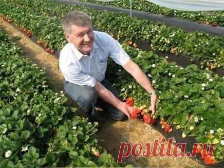 (4) Огород, где все растет. Советы дачнику - Публикации