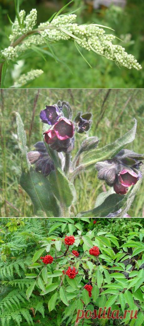 Растения, отпугивающие мышей и крыс — 6 соток