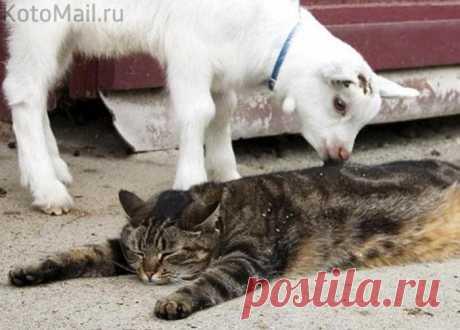 Какой же котик не любит массаж?