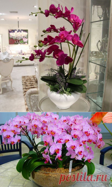 Удобряйте орхидеи, ПРАВИЛЬНО.