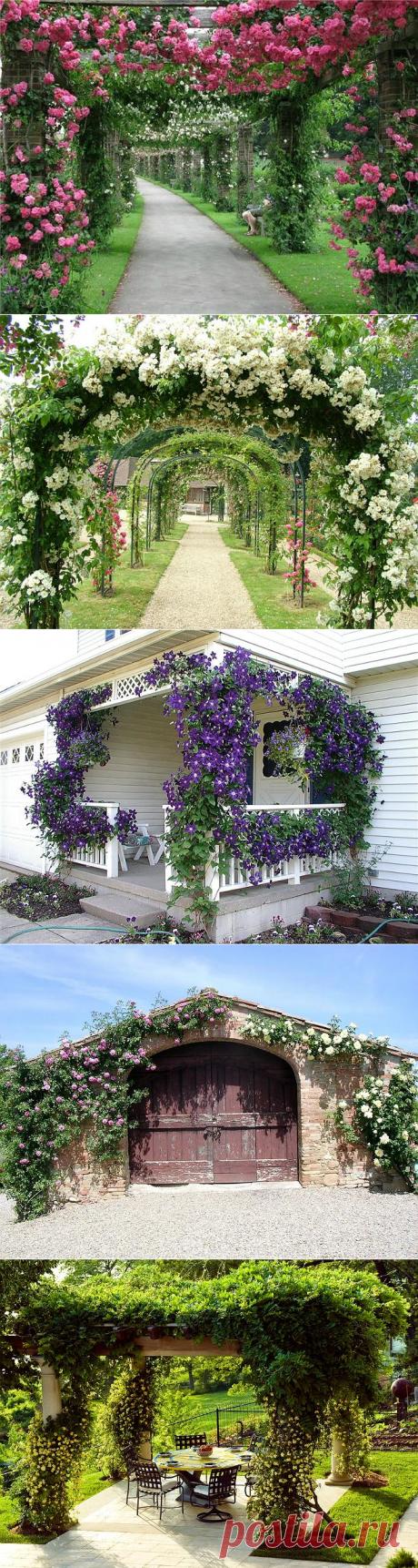 Вьющиеся растения для сада: яркое украшение усадьбы | Дизайн участка (Огород.ru)