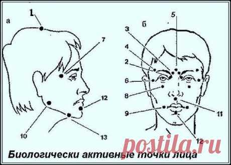 Биологически активные точки на голове - ваша скорая помощь — Полезные советы