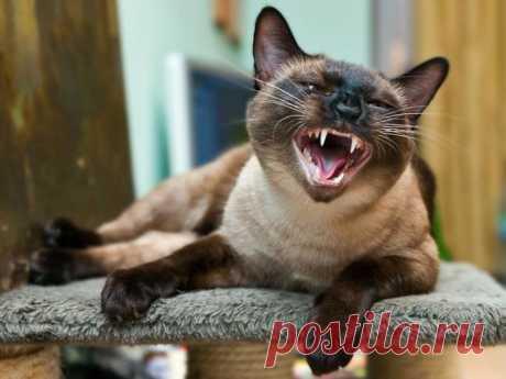 10 удивительных фактов из кошачьей жизни | На всякий случай