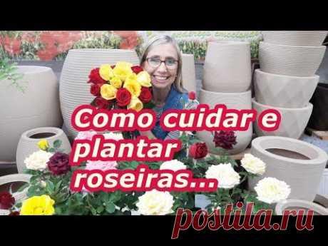 Como cuidar e plantar roseiras. #comoplantarroseiras #fazermudasderoseiras #plantasdejardim