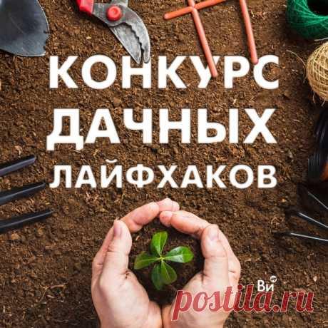 Каждый дачник – опытный и не очень – имеет свои хитрости. Почему бы ими не поделиться! Расскажите, как вы добиваетесь классных результатов на даче. Возьмите на вооружение идеи других садоводов. Обмениваться опытом – это здорово! Тем более если за это можно получить полезный приз. 🎁Что можно выиграть? 1 место - сертификат на 25000 рублей 2 место - сертификат на 15000 рублей 3 место - сертификат на 5000 рублей +В группе ВКонтакте пройдет зрительское голосование 5 участников, набравших больше…