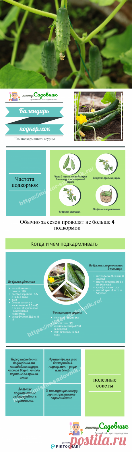 Внекорневая подкормка для огурцов в грунте и теплице