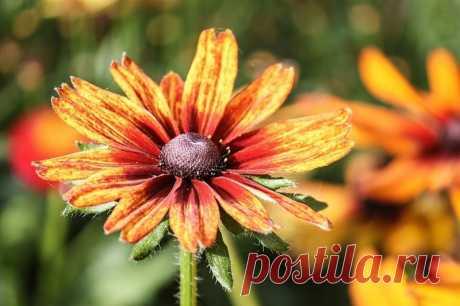 Какие цветы еще не поздно посадить в июле Какие растения, высаженные в июле, будут цвести до поздней осени.