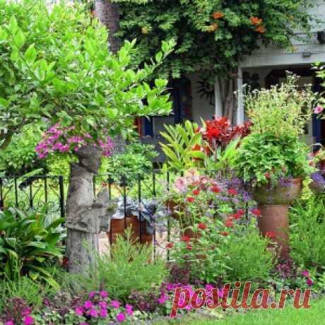 Самые неприхотливые цветы для «ленивого» сада - МирТесен