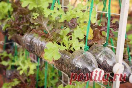 21 идея использования пластиковых бутылок на даче.