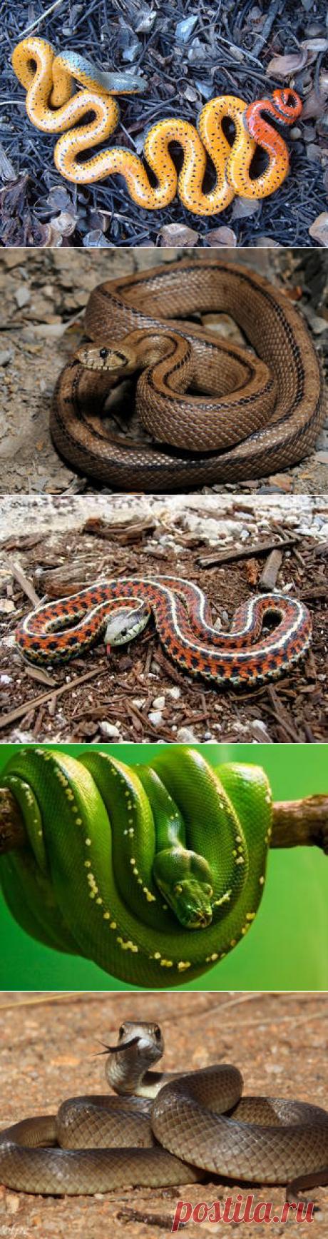 Смотреть изображения змей | Зооляндия