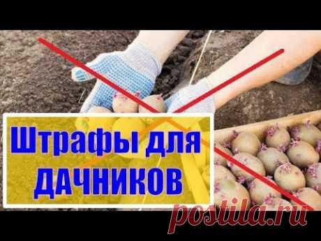 ШТРАФЫ ДЛЯ ДАЧНИКОВ о которых Вы не знали! Штраф за посадку картошки и много другое - YouTube