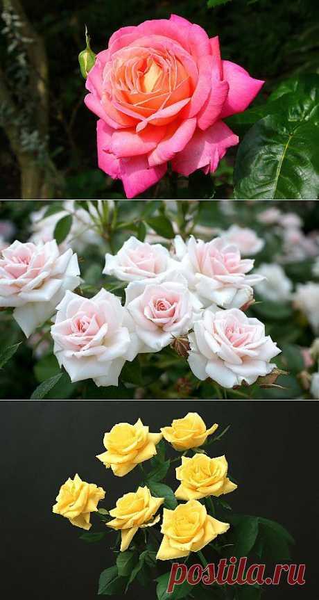 Цветы в сборнике обоев
