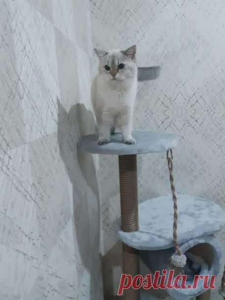 ☝️Коты не спрашивают, они просто берут все, что им надо. Кот Гарфилд 😻А Красавчик из Черкесска очень доволен своим новеньким КоТоДоМом! Большое спасибо за заказ и хвастик хозяину Станиславу Ивановичу! 👍 #kogtetochki_rus #cat #cats #russia #bengalcatsclub #meincoon #когтеточкикиров #беговоеколесодлякошек #кототренажер #котоселфи #котизм #бенгальскийкот #абиссинец #мейнкуны #бурманскаякошка #сфинксы #черкесск #апатиты #мурманск51 #кировск #артём #калуга