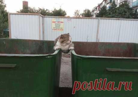 Самоуверенные котики / Питомцы