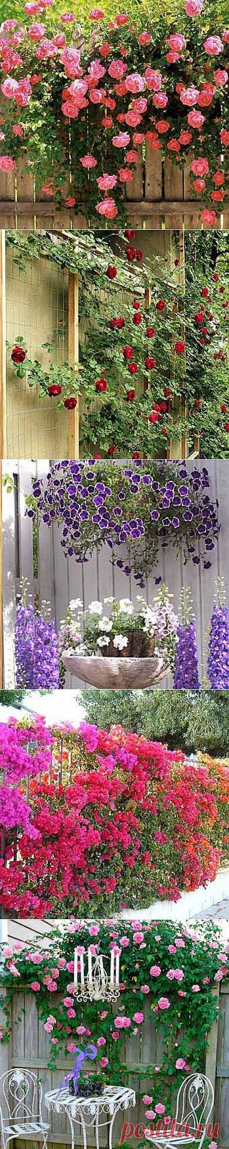 Photo of fences: 35 fences with flowers - Giving by the Hands