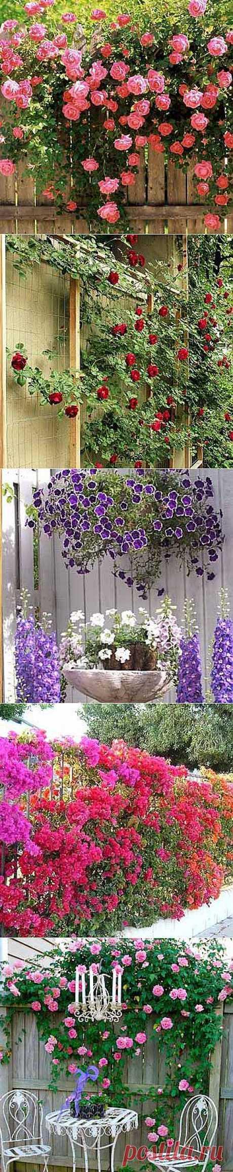 Фото заборов: 35 заборов с цветами - Дача Своими Руками