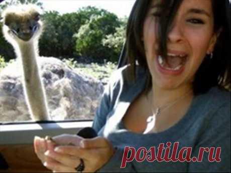 Смешные животные - 4   Приколы про котов :)