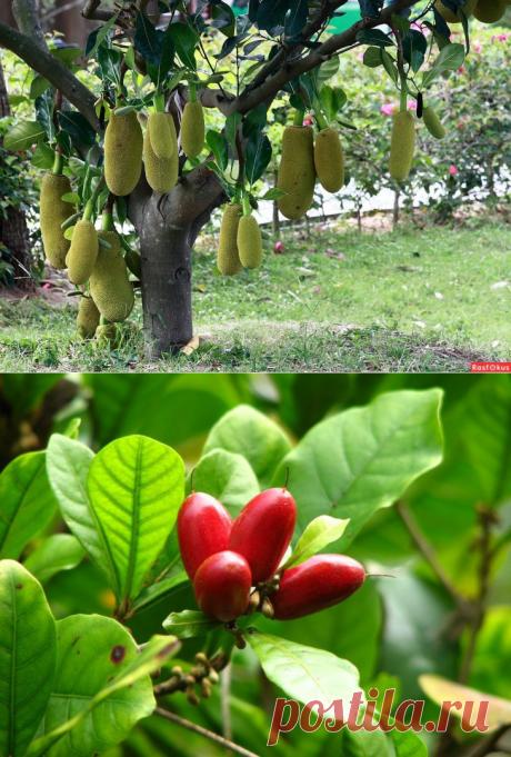 Сколько на планете видов фруктов? 20 видов, о которых Вы ничего не знали — Готовим дома
