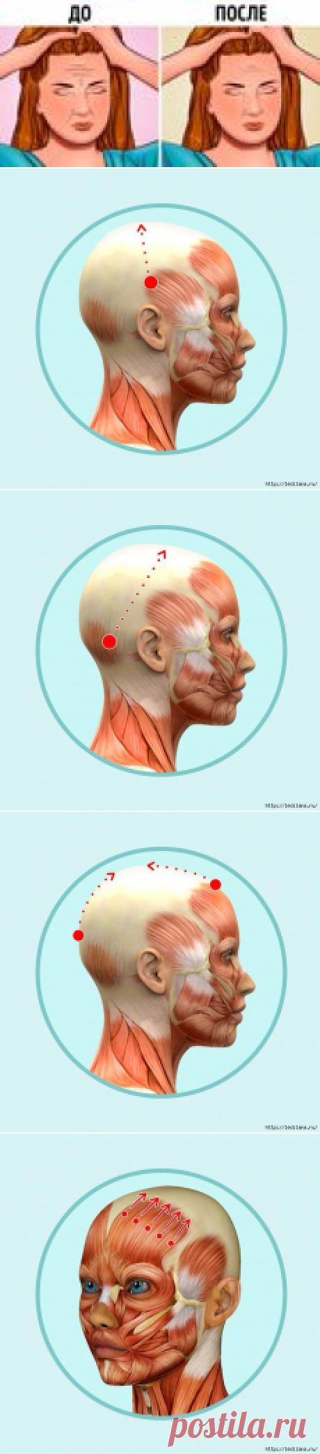 Здоровое состояние мышц и сухожильного шлема головы и шеи