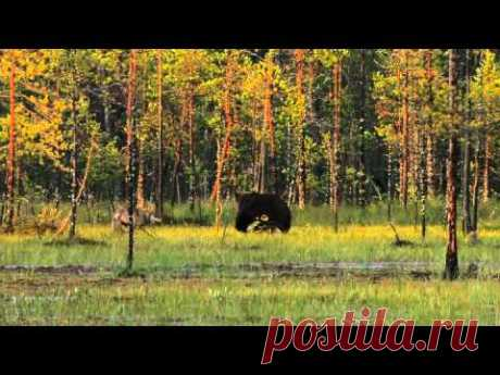 nature of Russia of all 6 series) Wildes Russland