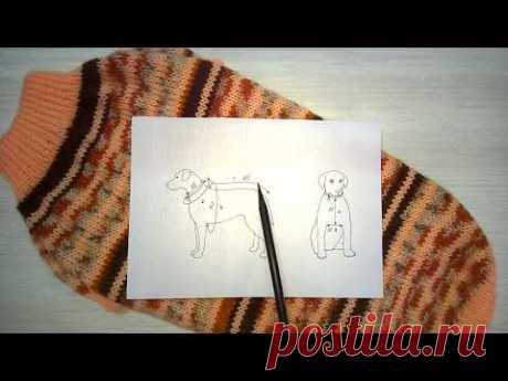 Как рассчитать петли реглана для вязания свитера собаке
