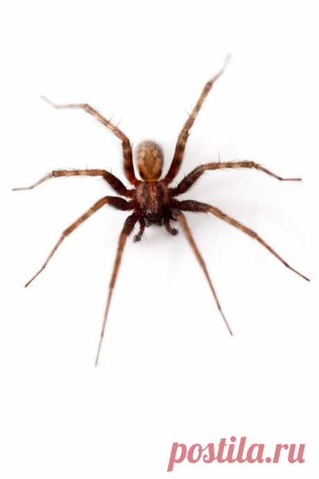 Spider Isolated  Free Stock Photo HD - Public Domain Pictures