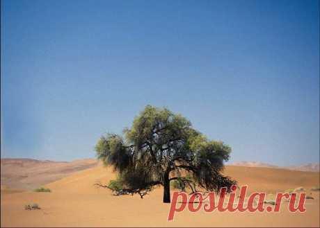 Дерево в пустыни