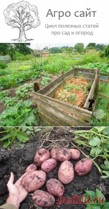 Какие органические удобрения вы знаете - применение органики
