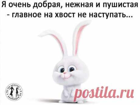 Пуси-пуси юмор для девушек и женщин. Подборка прикольных картинок и фото №ofigennaja-43380324112019 | Офигенная