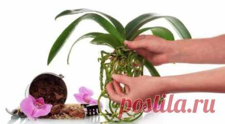 Янтарная кислота для орхидеи: можно ли поливать и протирать листья комнатного цветка, инструкция по применению, как развести препарат в таблетках