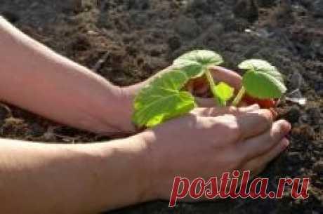10 мая в народном календаре Семен Ранопашец