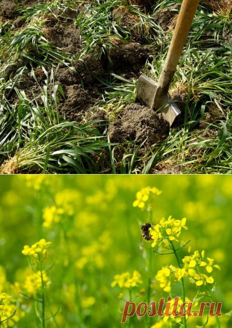 Органические удобрения из растений: сидераты, компост, жидкое зеленое удобрение