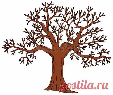 Картинки дерева без листьев (35 фото) ⭐ Забавник