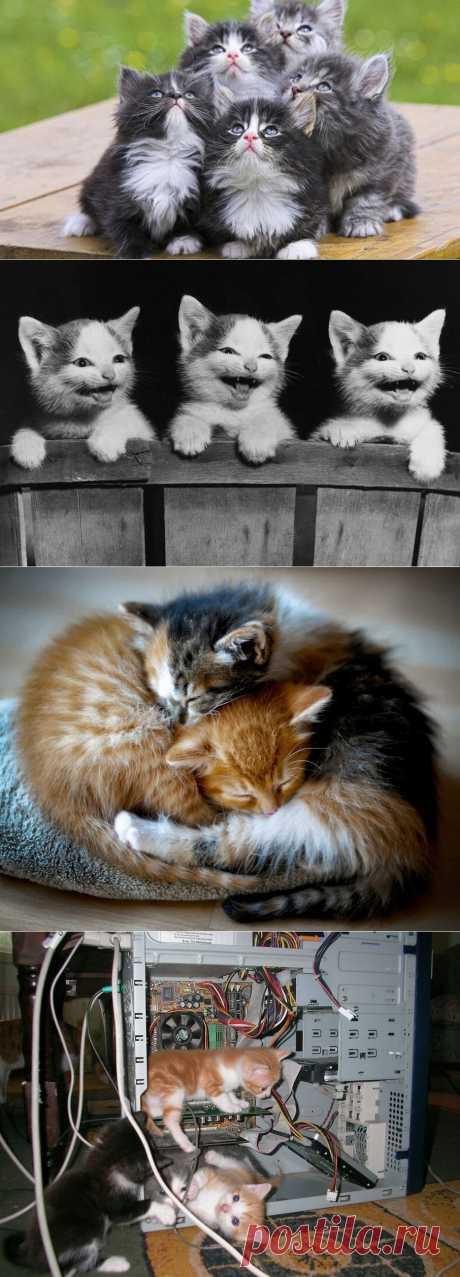 61 снимки на котенца