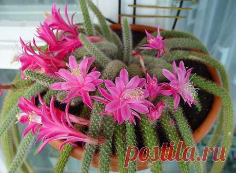 Какие они разные эти кактусы — Чудеса
