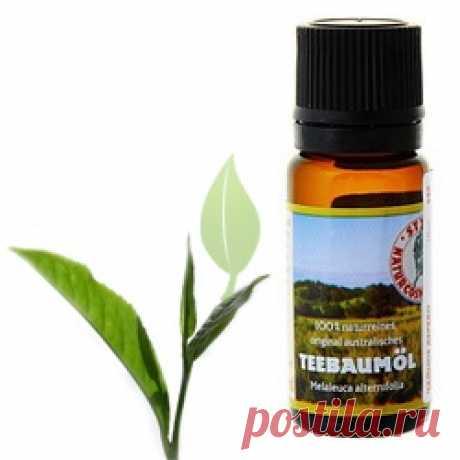 Масло чайного дерева. Полезные свойства. Лечение. Применение   Блог Ирины Зайцевой