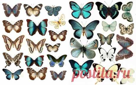 Картинки бабочек для вырезания из бумаги (36 фото) ⭐ Забавник