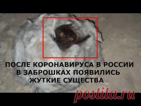 ЖУТКОЕ СУЩЕСТВО В ЗАБРОШКАХ ПОСЛЕ КОРОНАВИРУС В РОССИИ! В Заброшках нашли странное существо, оно пряталось в коконе. кокон большой покрыт белым пухом там внутри был какое то неизвестное существо. это инопланетное существо