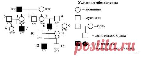 Задание №28 ЕГЭ по биологии 🐲 СПАДИЛО.РУ
