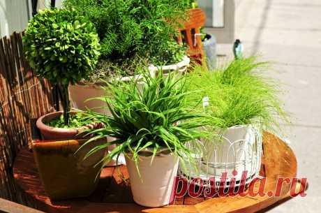 Натуральные удобрения для домашних растений | sunny7 - женский портал