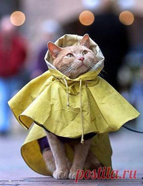 кажется дождь собирается