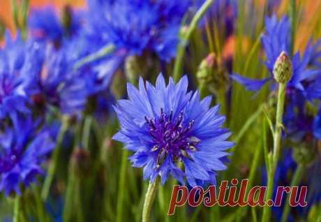 """Волшебные растения... - Познавательный сайт ,,1000 мелочей"""" - медиаплатформа МирТесен"""