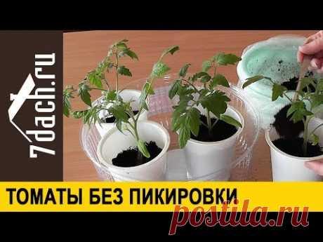 🍅 Как вырастить рассаду томатов без пикировки - 7 дач - YouTube