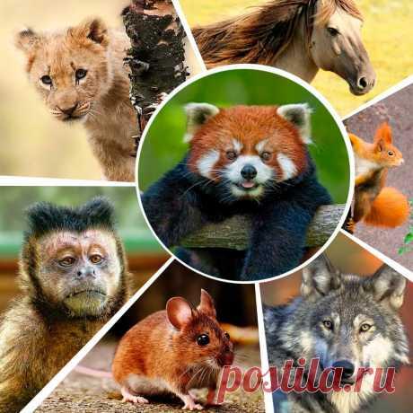 Тест о животных: Млекопитающие | KUPIDONIA.RU | Яндекс Дзен