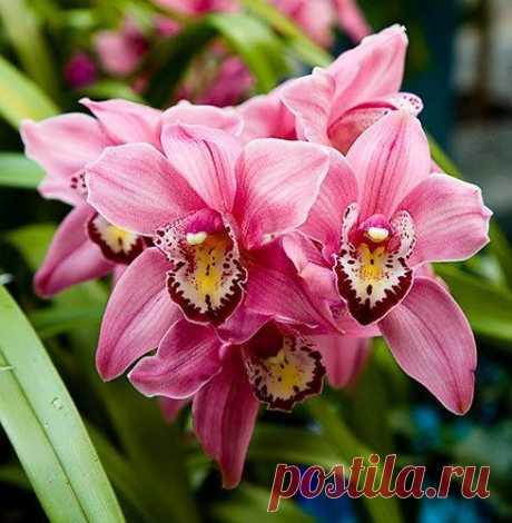 орхидеи Секреты выращивания