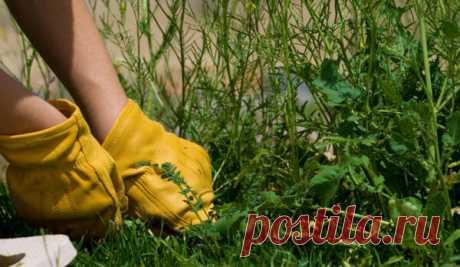 Мой способ борьбы с сорняками на даче   Блоги о даче и огороде, рецептах, красоте и правильном питании, рыбалке, ремонте и интерьере